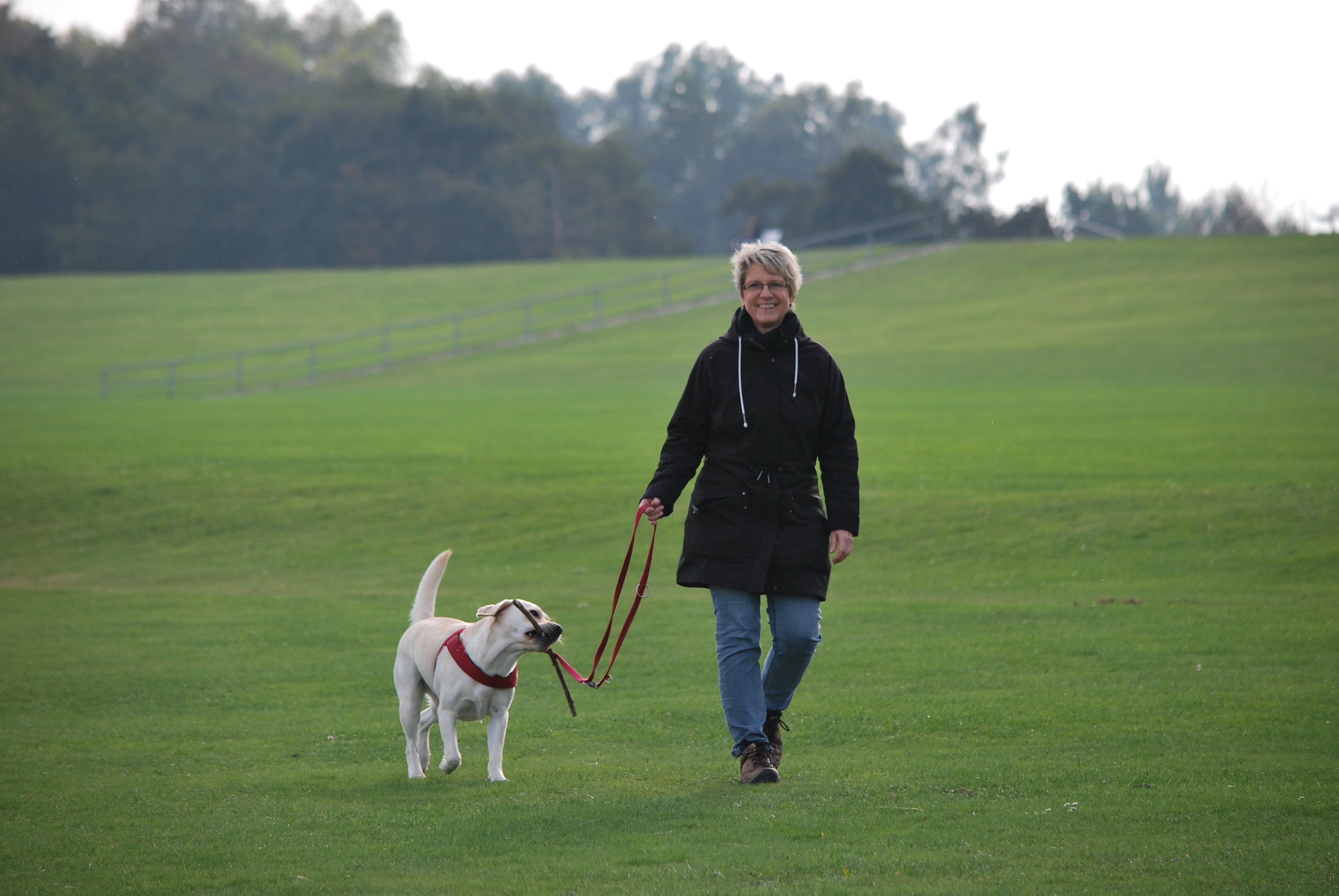 Woman Walking on Grass Field With Yellow Labrador Retriever Puppy