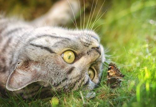 Foto stok gratis anak kucing, atensi, berbayang, binatang