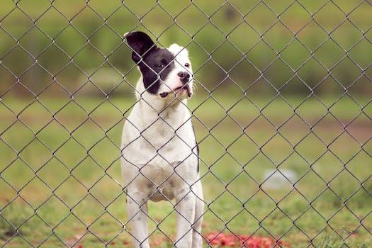 clôture électronique pour chien