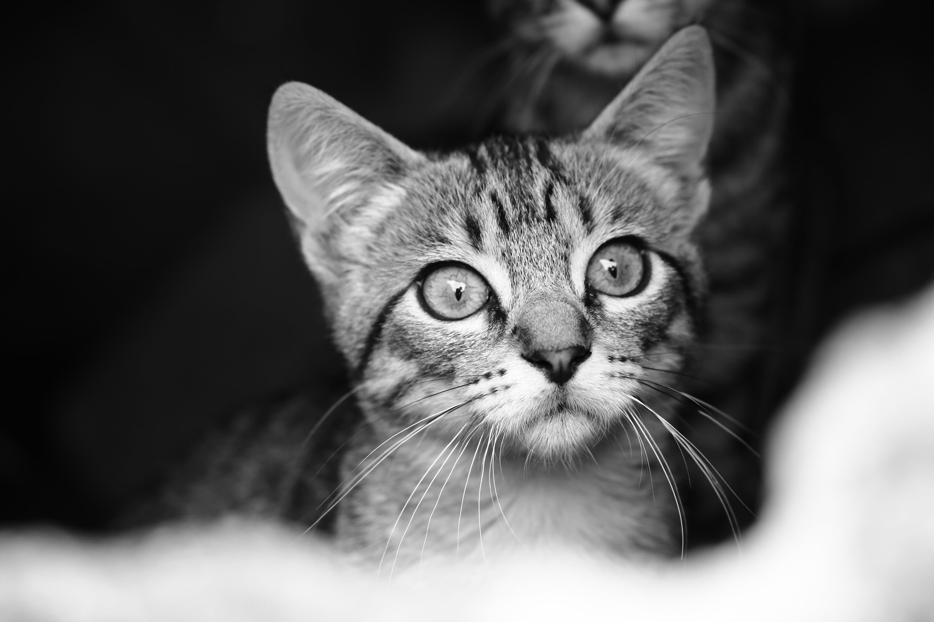 Space Gray Photo of Cat