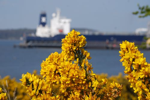 宏觀, 海, 背景, 船 的 免费素材照片