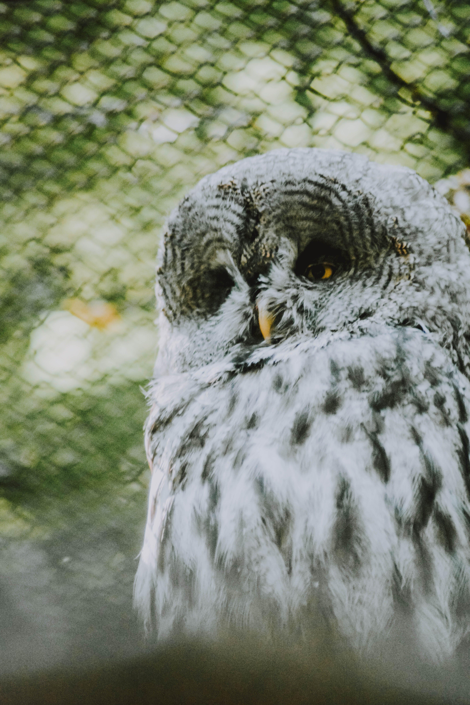 Základová fotografie zdarma na téma divočina, dravec, fotografování zvířat, noční