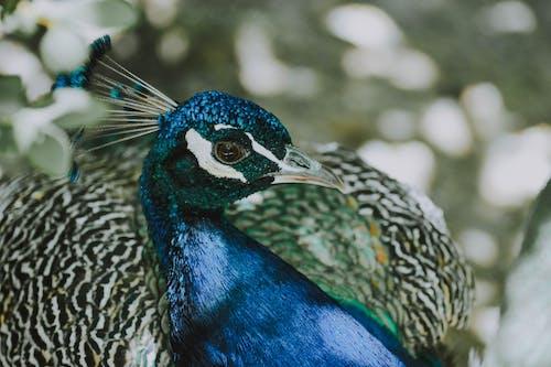 Fotobanka sbezplatnými fotkami na tému divočina, HD tapeta, krásny, na zvislo