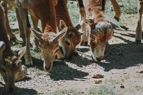 Graceful deer grazing on meadow in summer