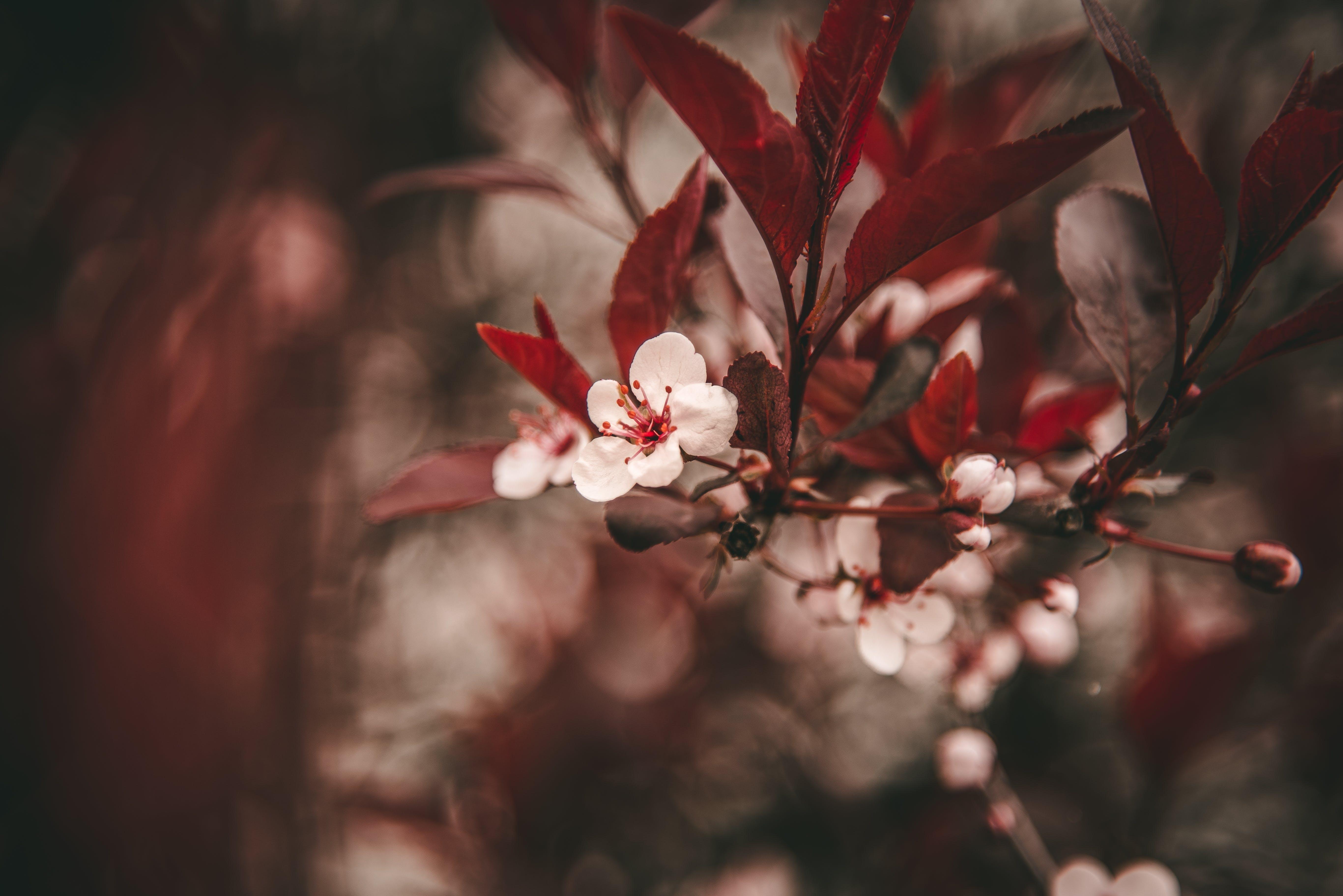Gratis lagerfoto af blomster, blomstrende, dof, farve