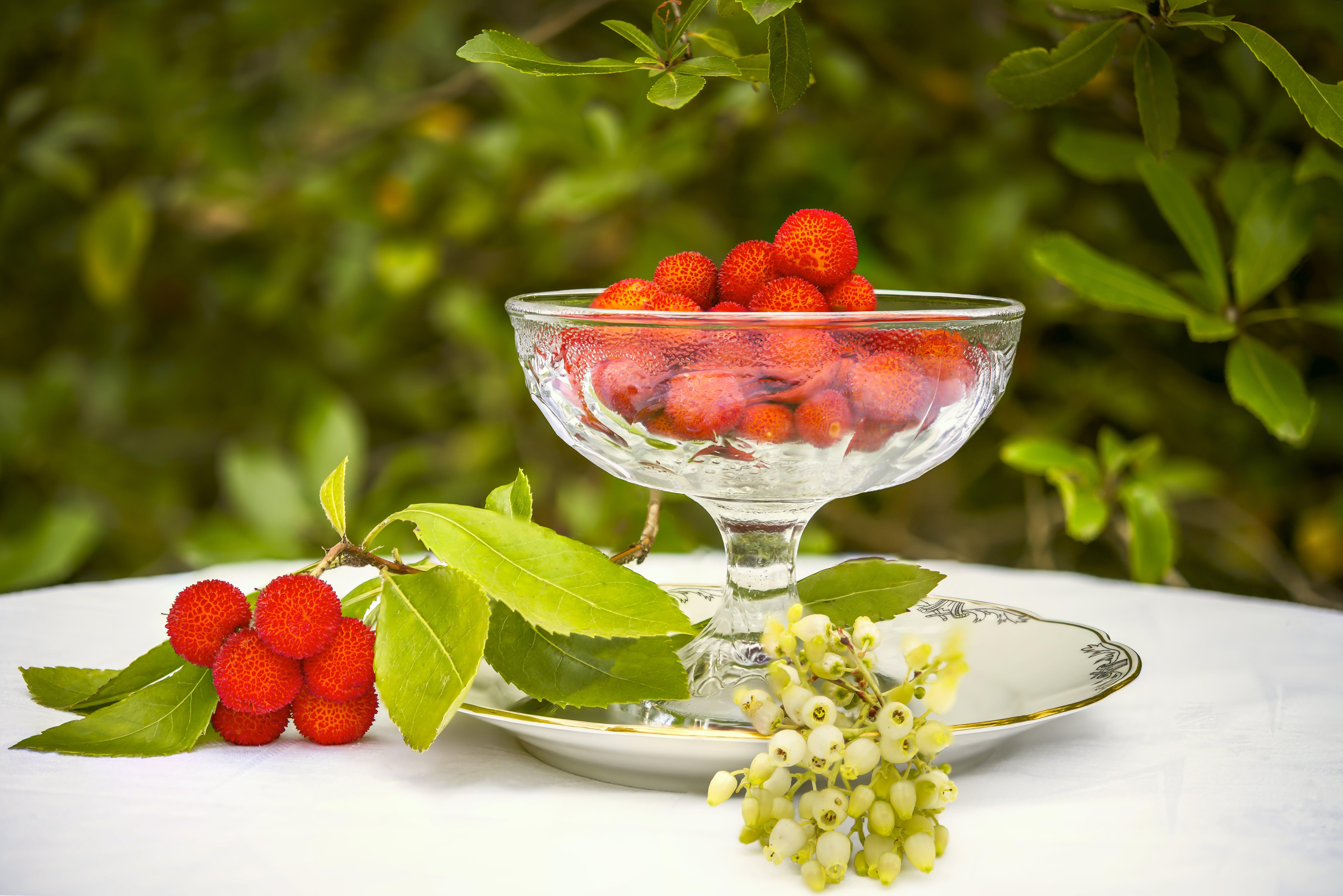 arbutus, arbutus unedo, berry