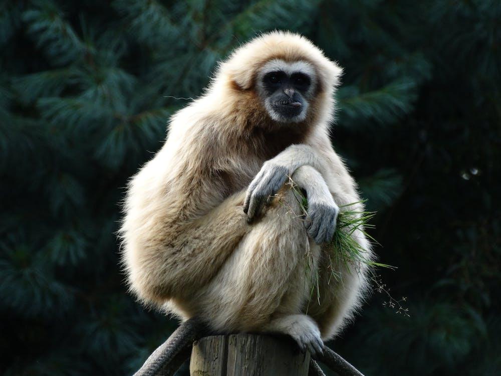 Monkey Sitting on Post
