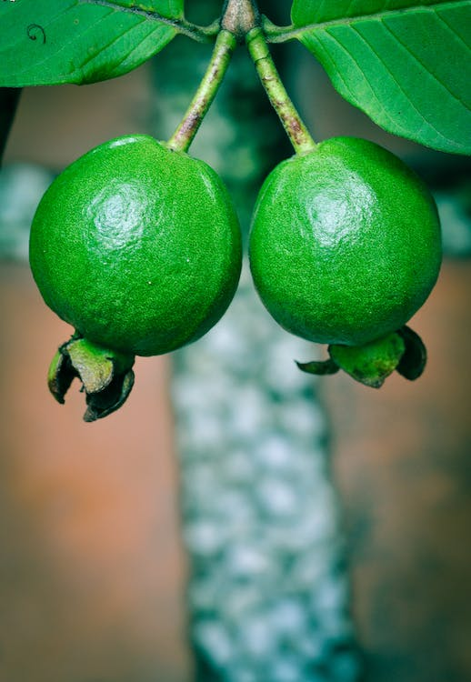 Two Green Guavas