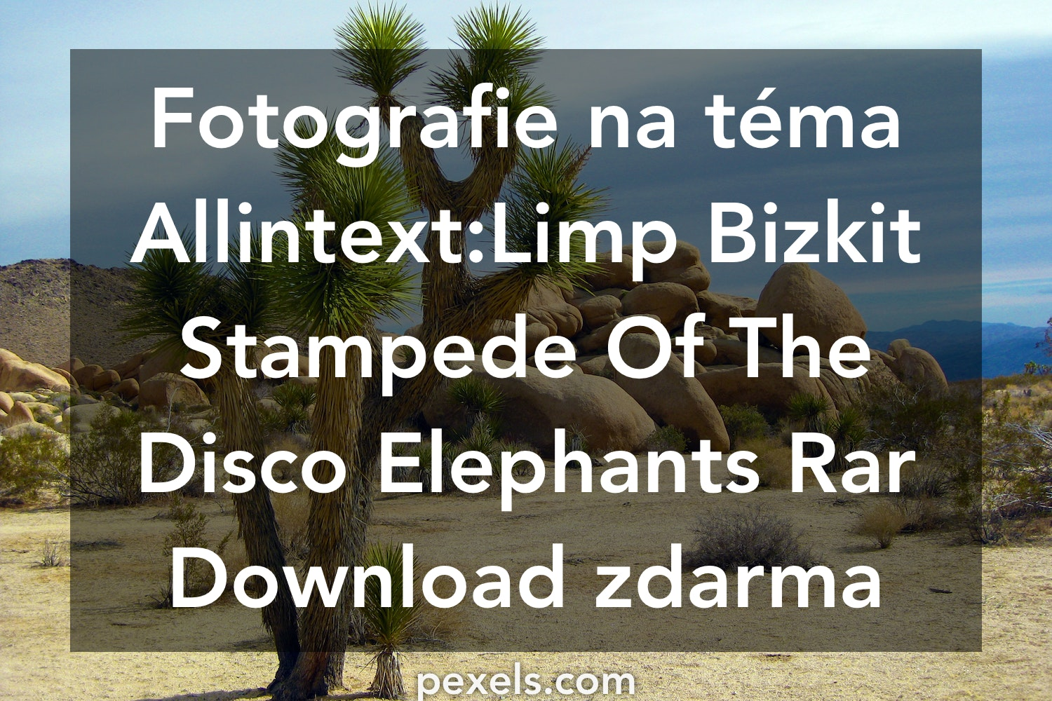 stampede of the disco elephants release