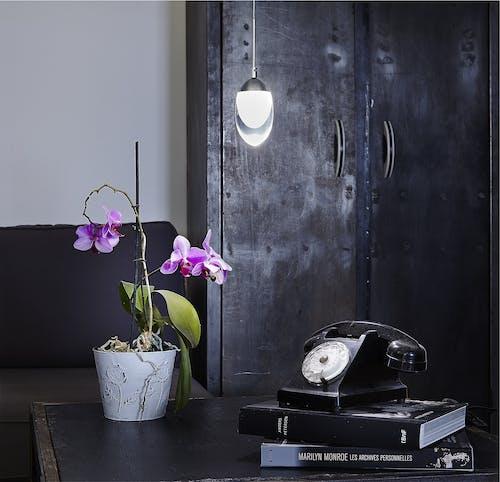 Бесплатное стоковое фото с ваза, завод, книги, телефон