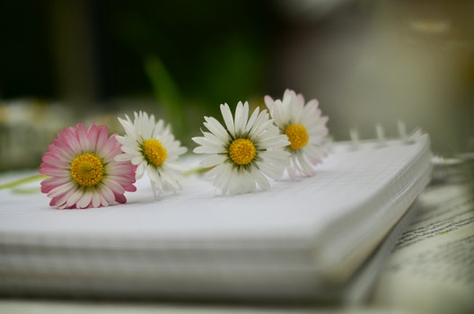 Free stock photo of flowers, notebook, paper, bloom