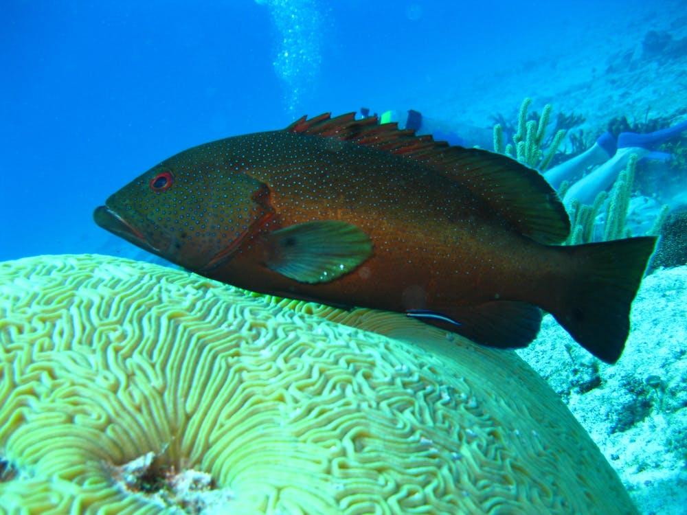 scuba, snorkeling, άγρια φύση