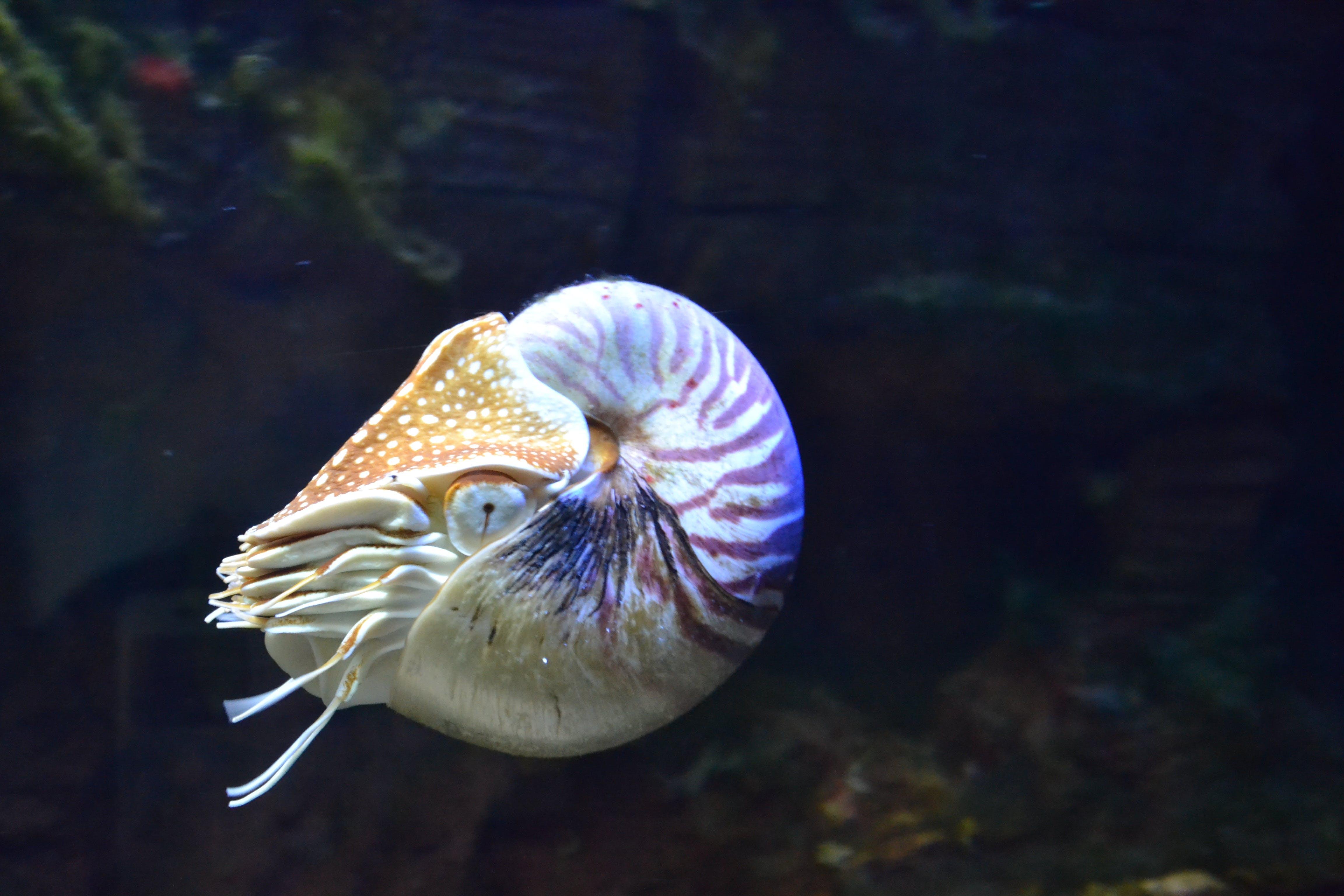Gratis lagerfoto af akvarium, dyr, undervands, vand
