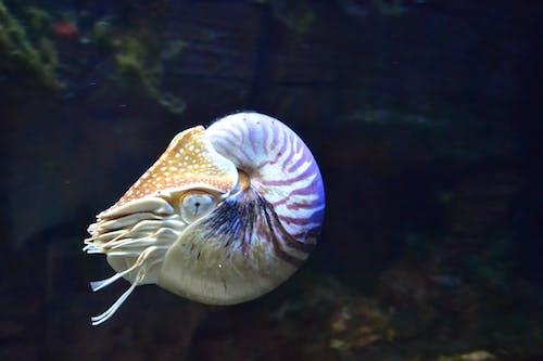 Gratis arkivbilde med akvarium, akvatisk, dyr, under vann