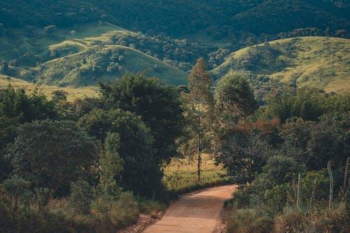 Gratis arkivbilde med ås, dal, grønn, landskap