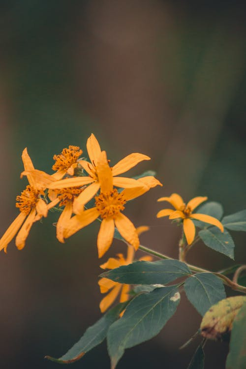 Close-Up Photo of Yellow Flowers