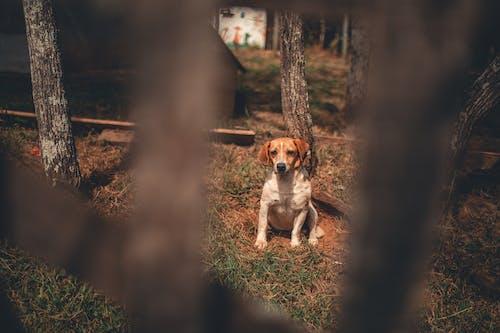 Imagine de stoc gratuită din adorabil, animal, animal de casă, arbori