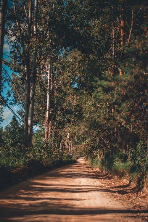 Fotobanka sbezplatnými fotkami na tému cesta, exteriéry, kmene stromov, lesy