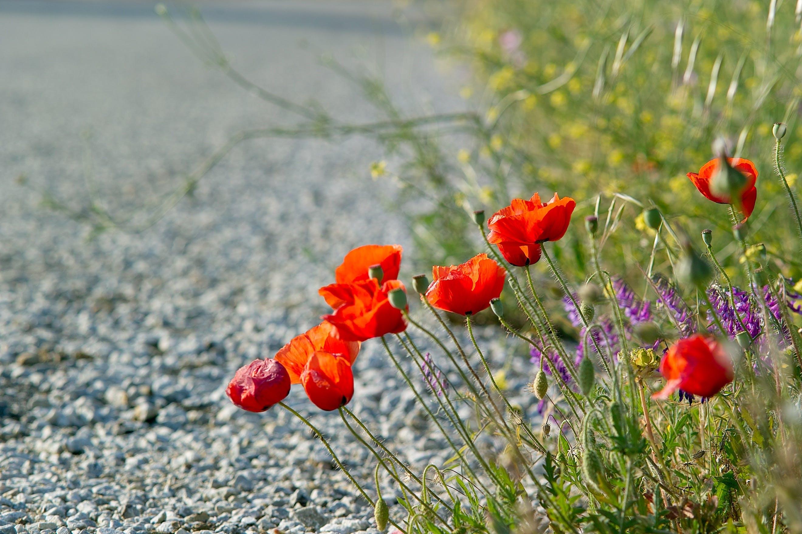 Free stock photo of road, summer, blossom, bright