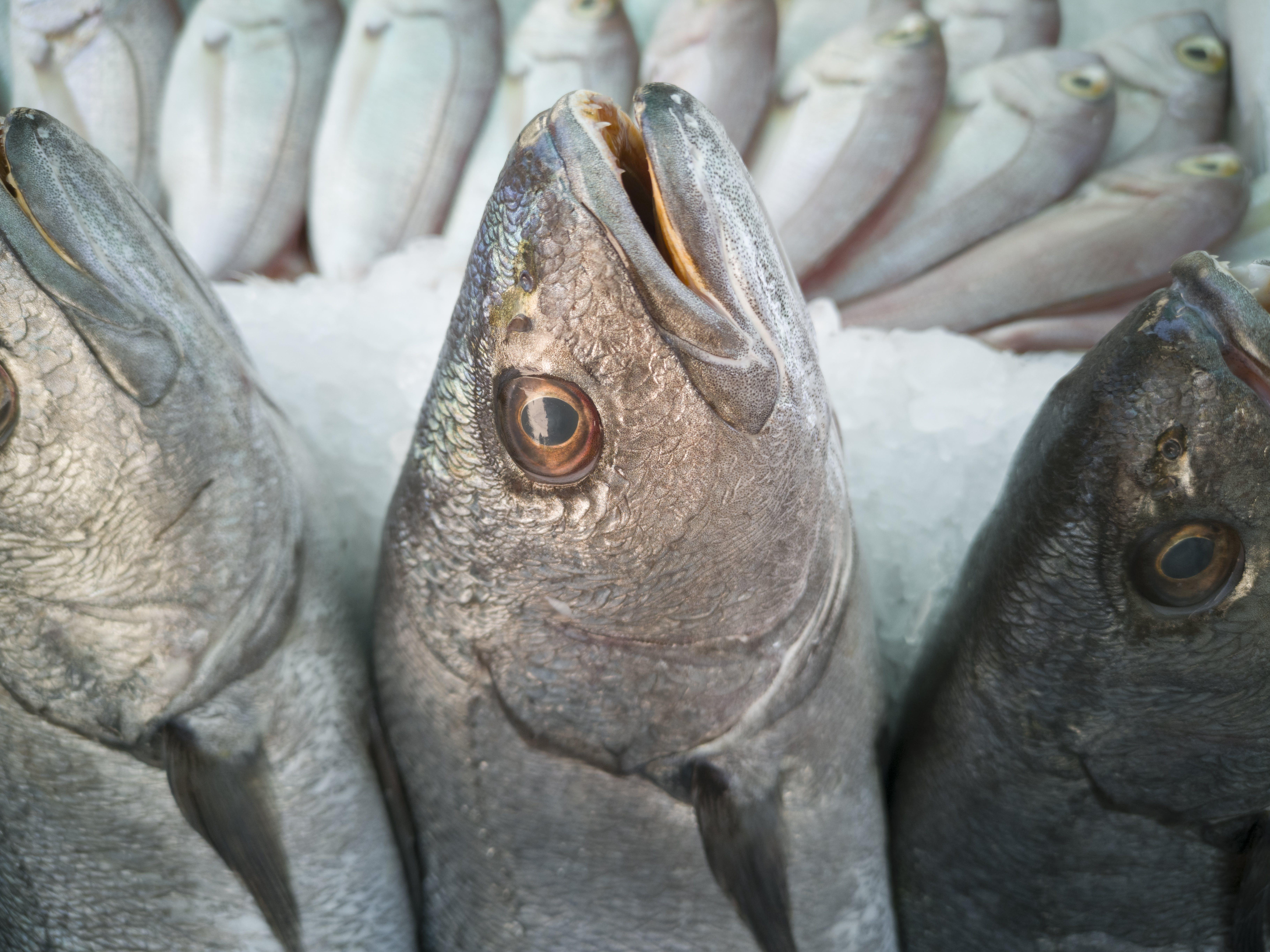 Kostenloses Stock Foto zu eiweiß, essen, fisch, fischmarkt