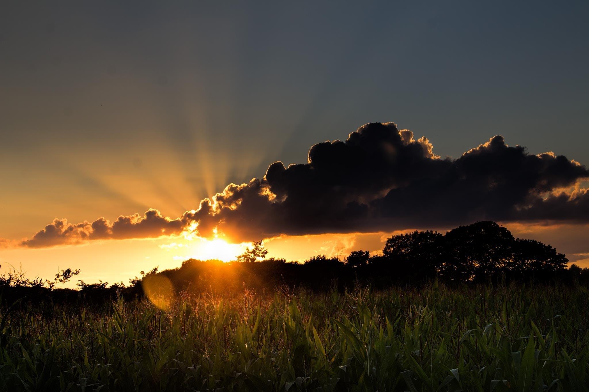 açık, akşam, alan, altın içeren Ücretsiz stok fotoğraf