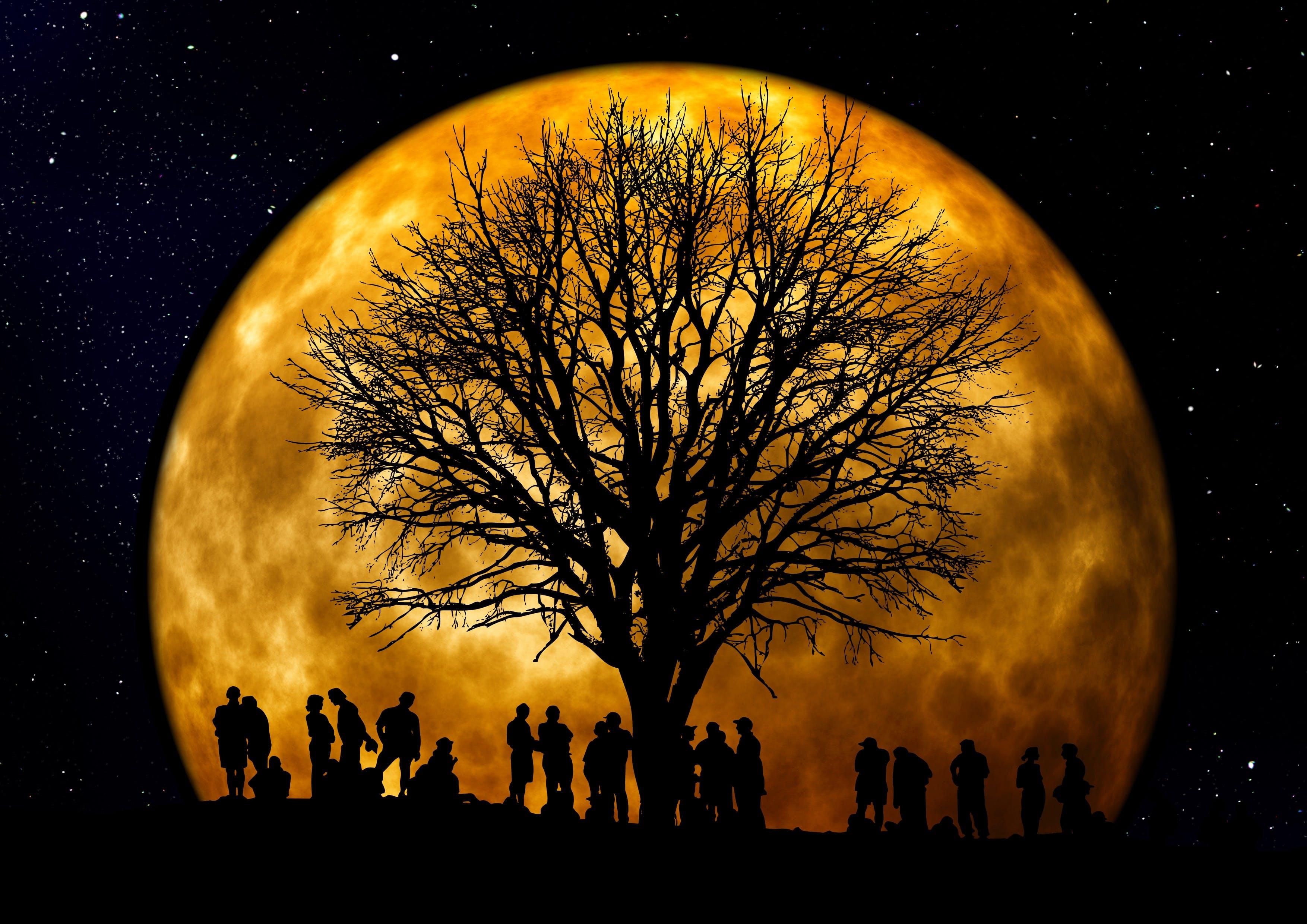 Free stock photo of people, night, dark, silhouette