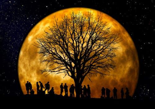 Бесплатное стоковое фото с дерево, звезды, луна, люди