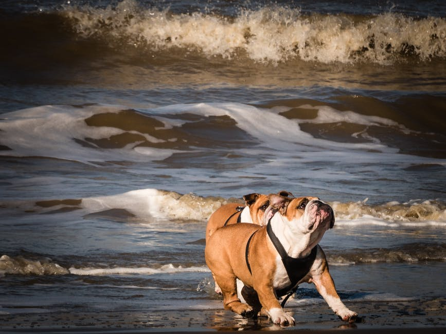 action, beach, canine