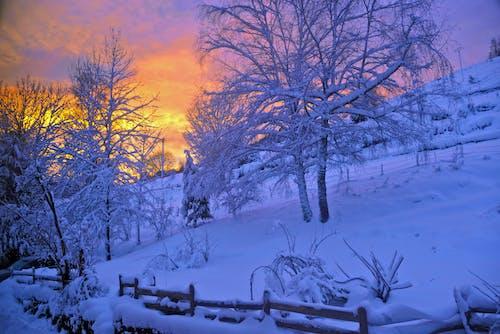 Gratis stockfoto met berg, bomen, dageraad, kou