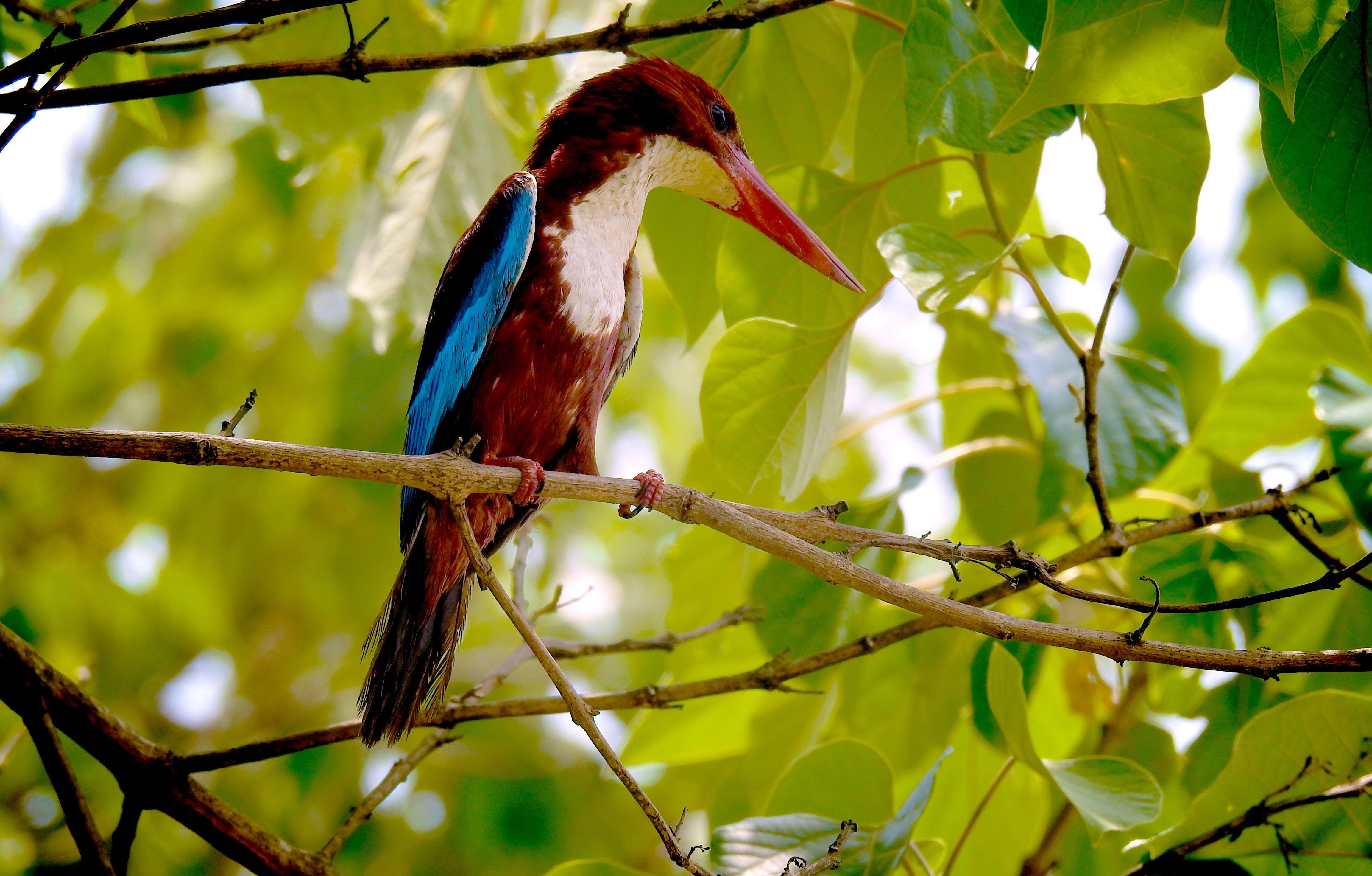 Brown Bird Perching on Tree
