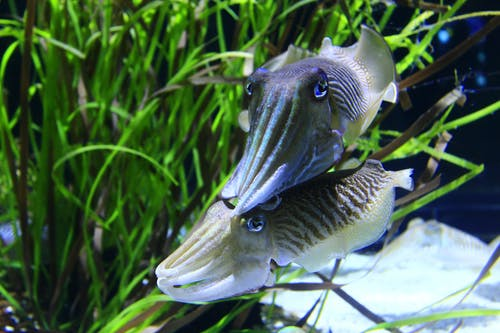 Gratis arkivbilde med akvarium, akvatisk, gress, svømme