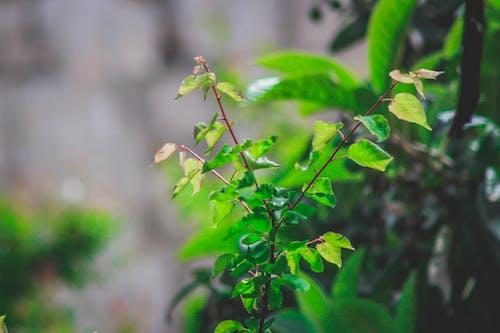 Fotobanka sbezplatnými fotkami na tému listy, rast, rastlina, záhrada