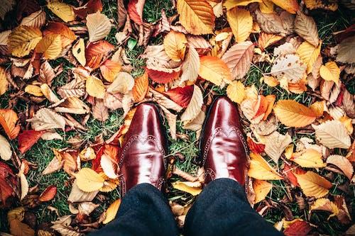 Foto profissional grátis de brilhante, chão, cor, dourado