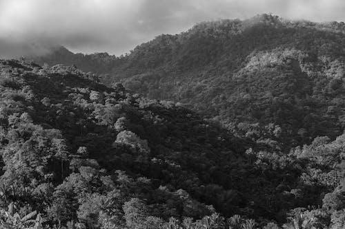 Бесплатное стоковое фото с пейзаж, черно-белый