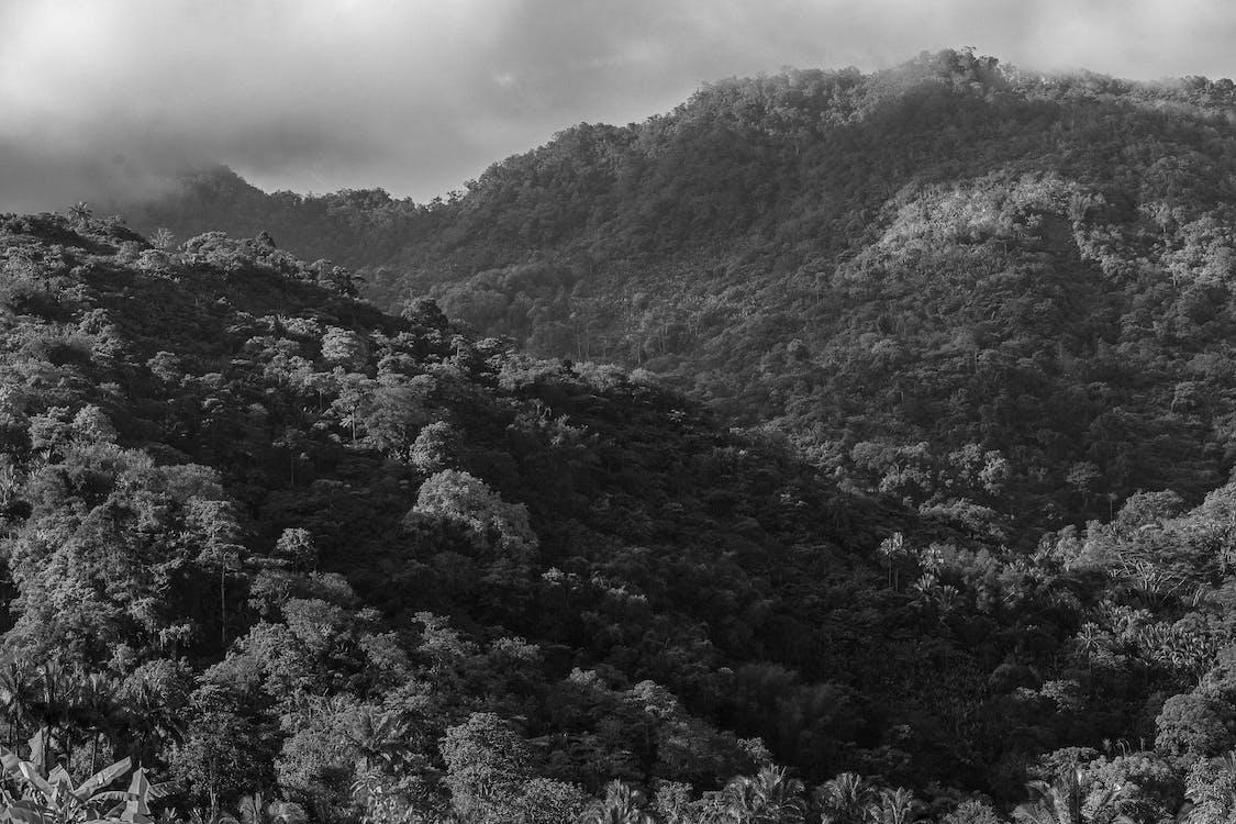 landskab, sort og hvid