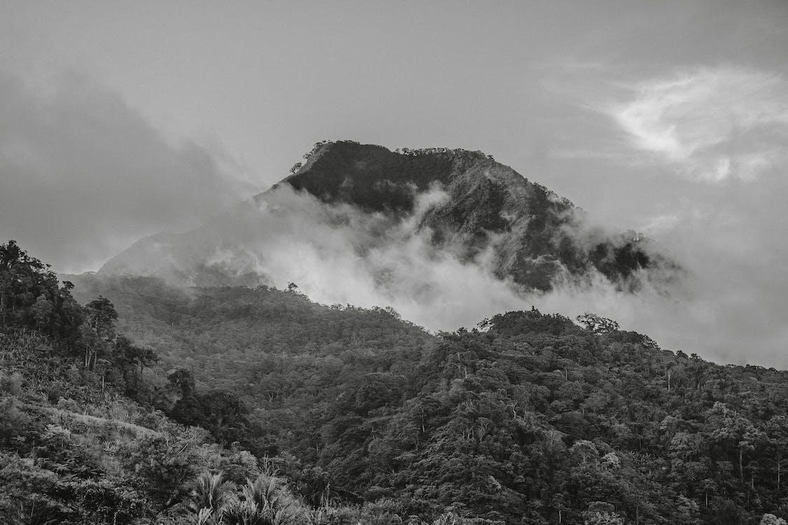arbres, brouillard, brumeux