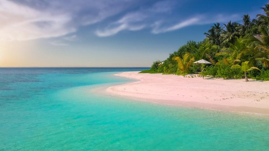 beach, coast, coconut trees