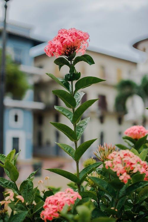 blomma, blommor, flora
