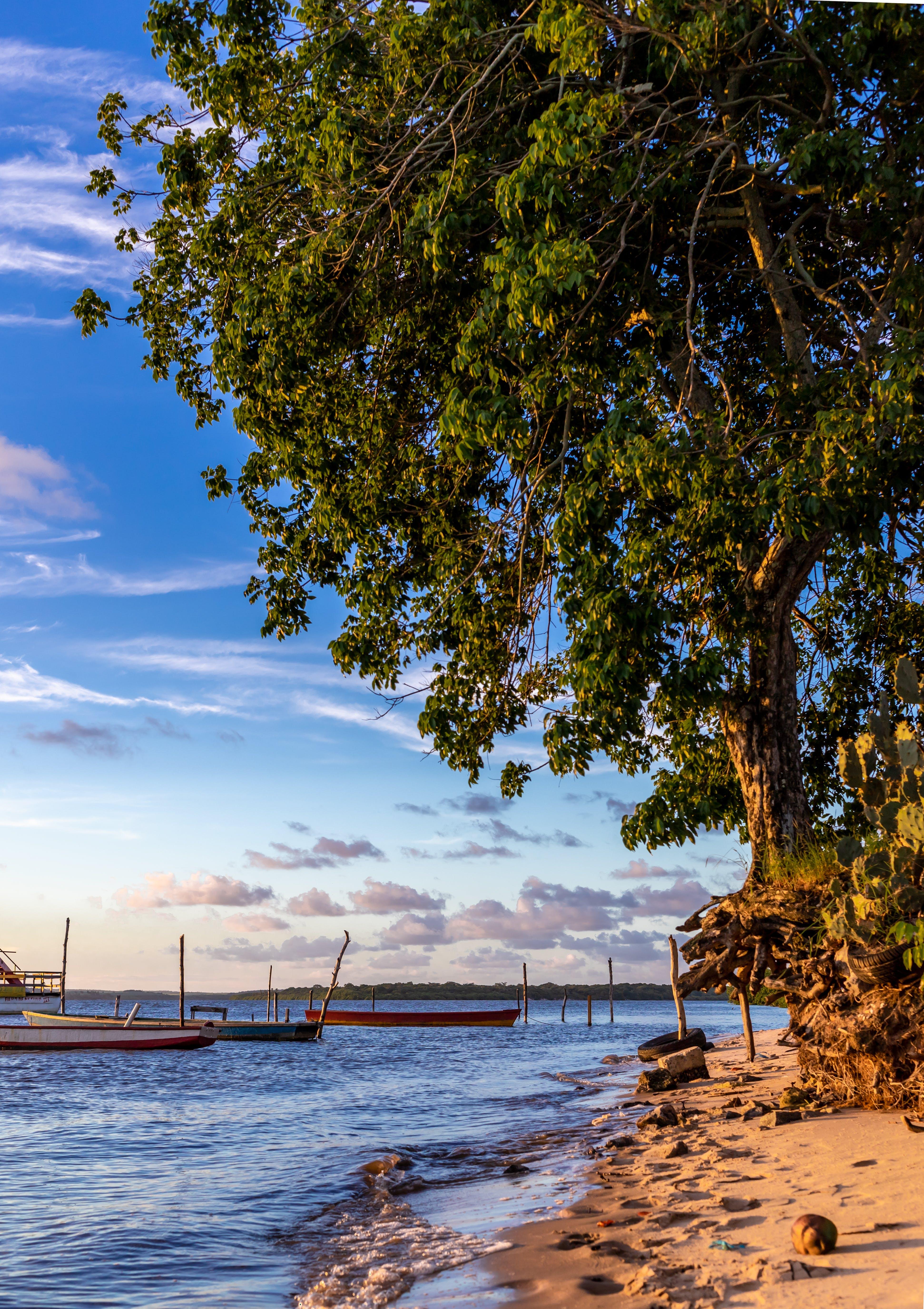 Gratis lagerfoto af både, dagslys, hav, himmel