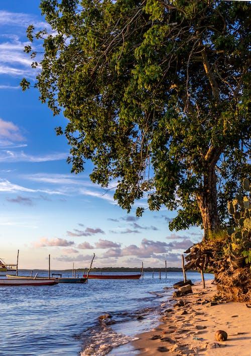 açık hava, ağaç, ahşap, bulutlar içeren Ücretsiz stok fotoğraf