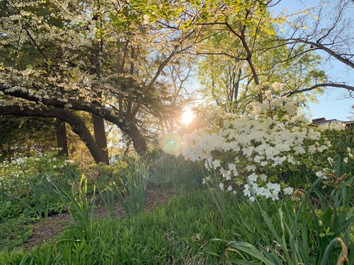 Free stock photo of beautiful flowers, botanical garden, garden, sunset