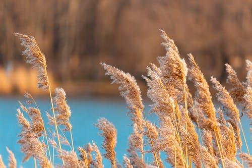 riet, 水, 滋養, 藍色 的 免費圖庫相片
