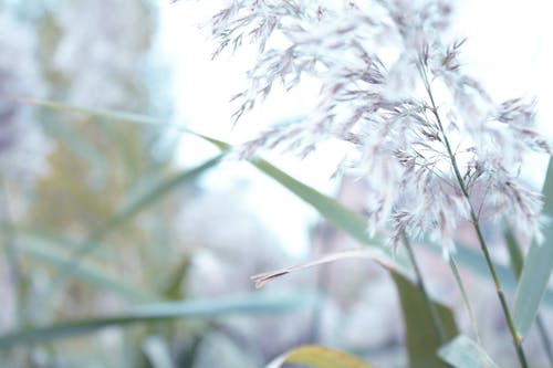 Безкоштовне стокове фото на тему «#nature, #outdoorchallenge, близький, відкрите поле»