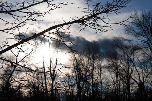Безкоштовне стокове фото на тему «#nature, #outdoorchallenge, вечірнє сонце, високі дерева»