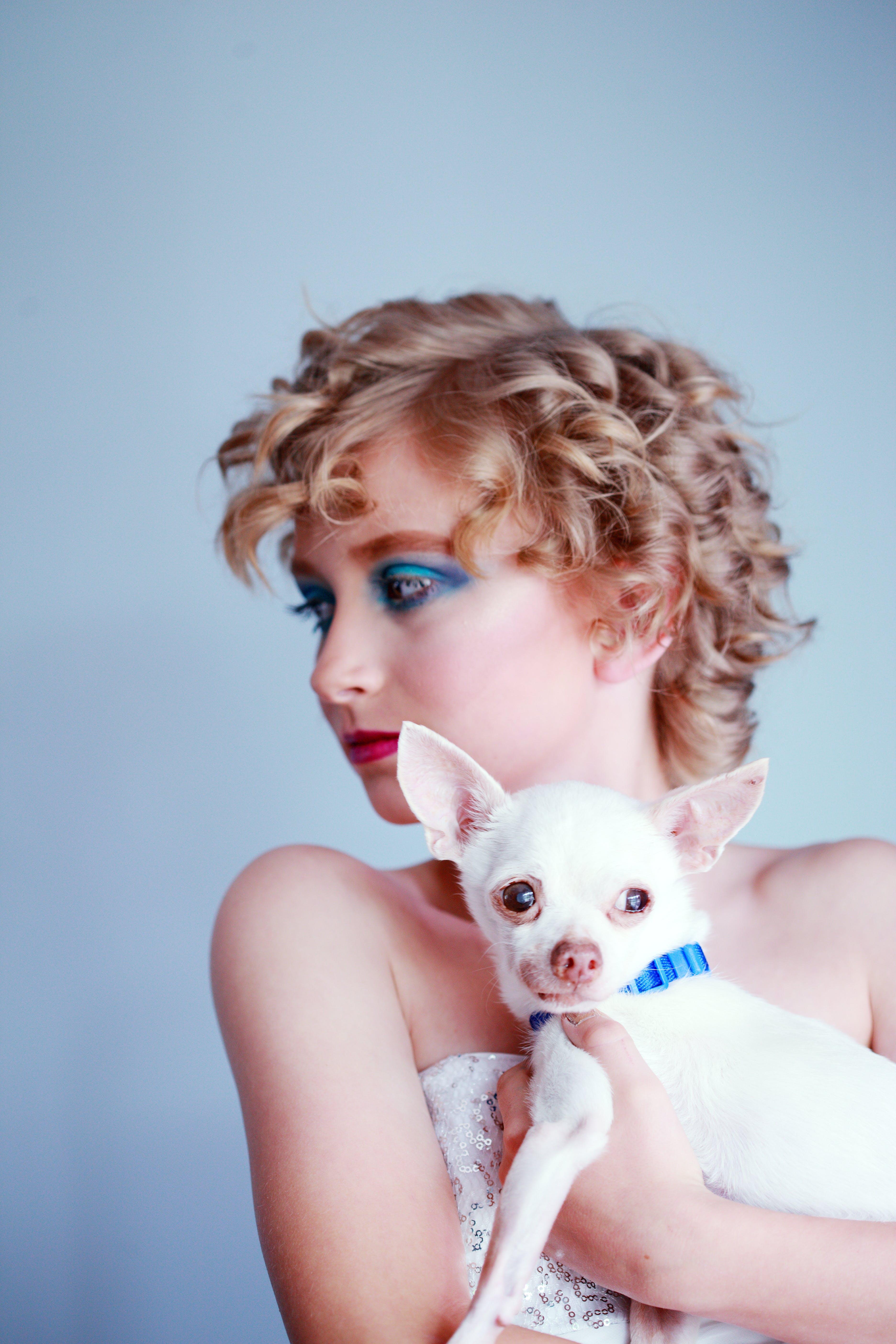 Gratis lagerfoto af blondine, chihuahua, dyr, familie
