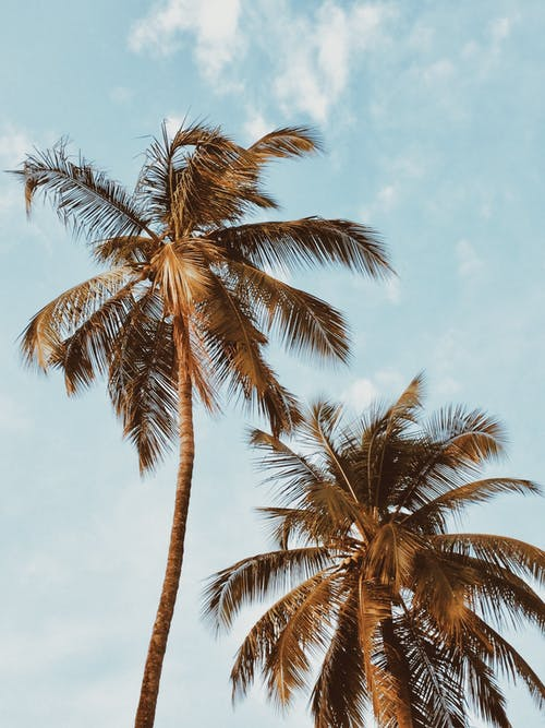 Gratis lagerfoto af fotografering fra lav vinkel, idyllisk, kokostræer, palmer
