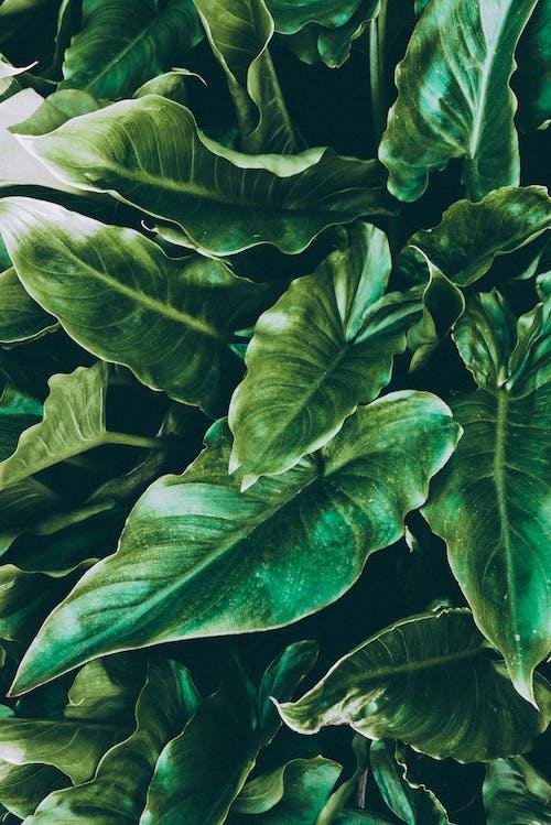 Foto profissional grátis de cor, ecológico, folhas, fotografia de pequenos seres