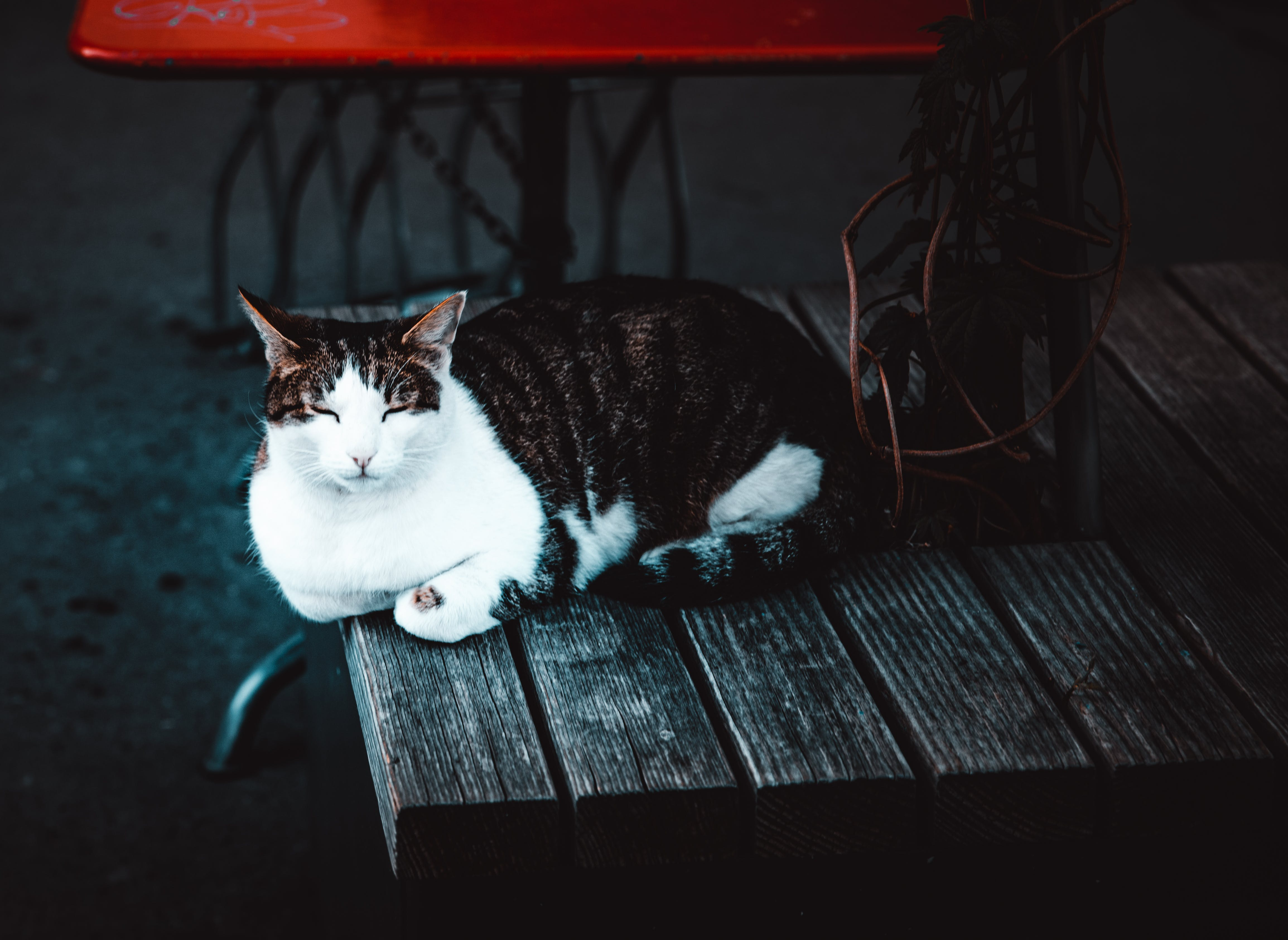 Cat Sleeping On Brown Wooden Table