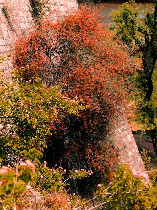 Δωρεάν στοκ φωτογραφιών με άνθη πορτοκαλιάς, κανάτα λουλουδιών, κάτω εικόνες, Κενταύρια
