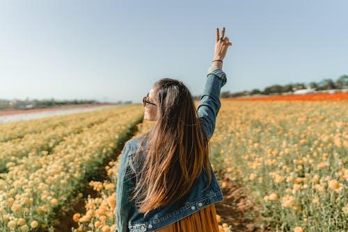 Foto stok gratis bidang, bidang bunga, bunga poppy, bunga-bunga